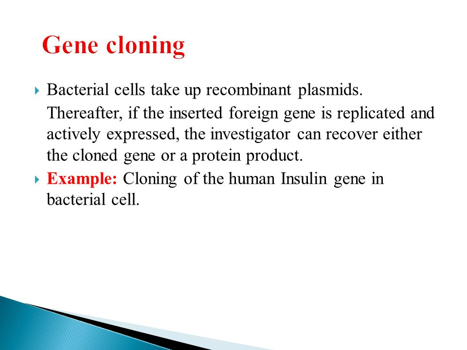 Gene cloning Bacterial cells take up recombinant plasmids.