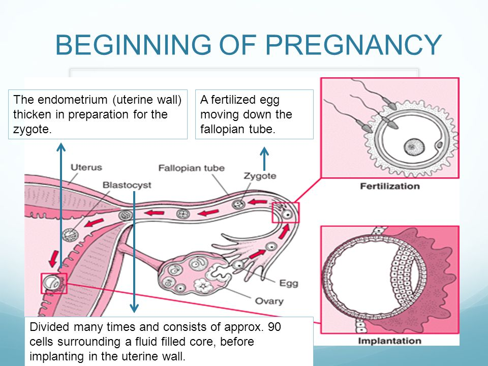 BEGINNING OF PREGNANCY