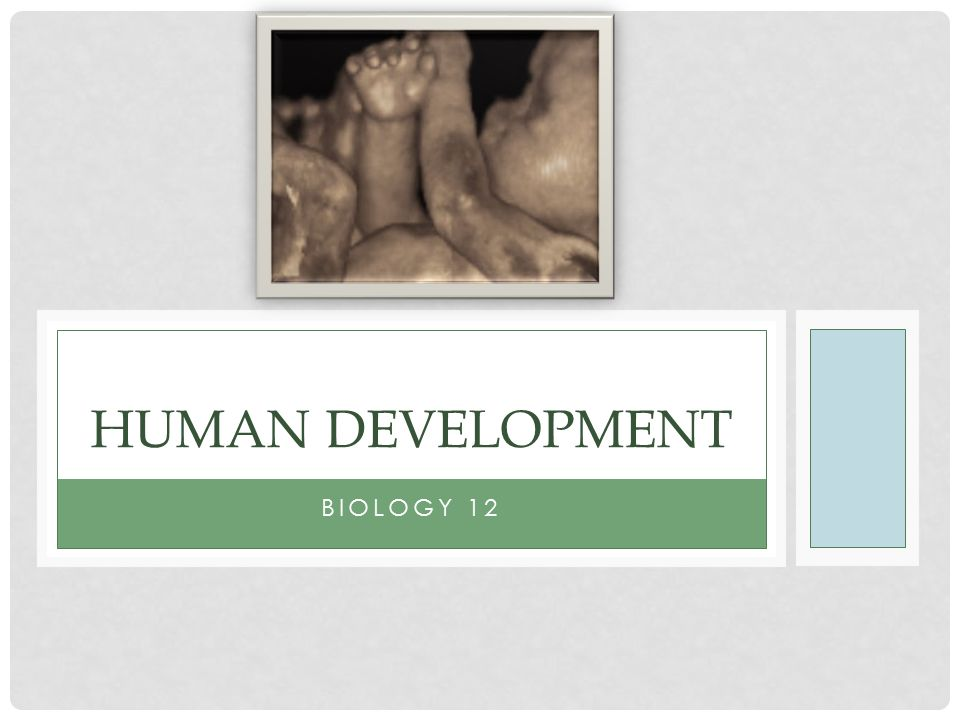 Human Development Biology 12