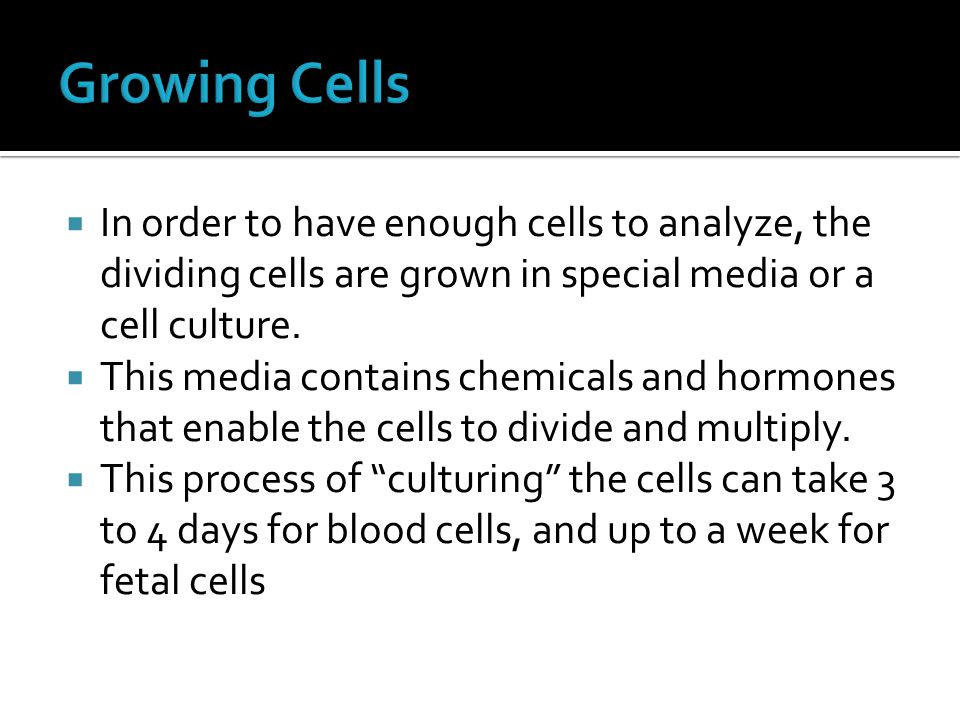 Growing Cells In order to have enough cells to analyze, the dividing cells are grown in special media or a cell culture.