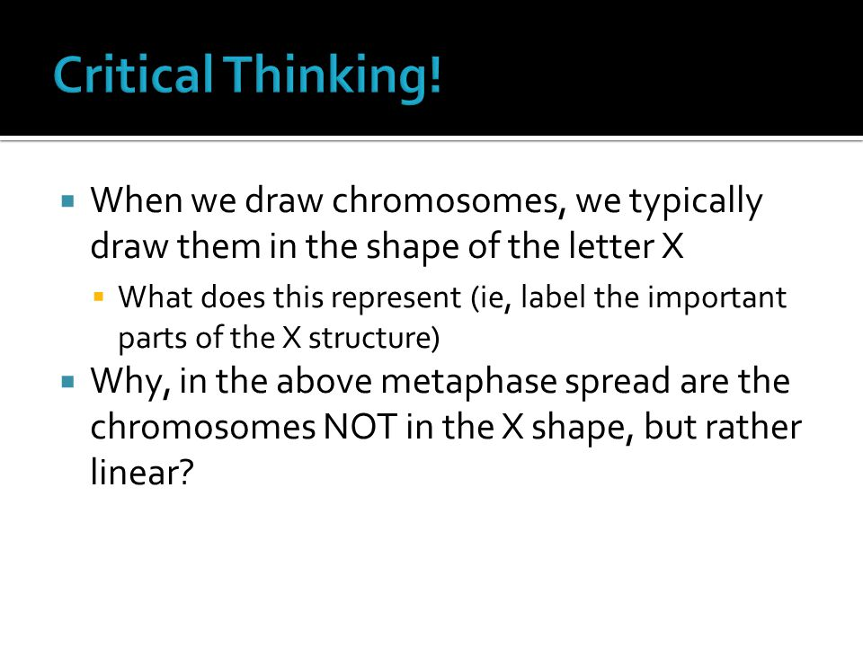 Critical Thinking! When we draw chromosomes, we typically draw them in the shape of the letter X.