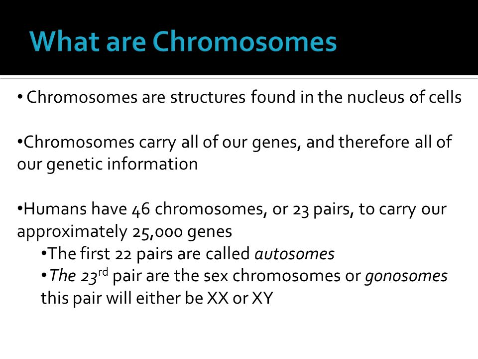 What are Chromosomes Chromosomes are structures found in the nucleus of cells.