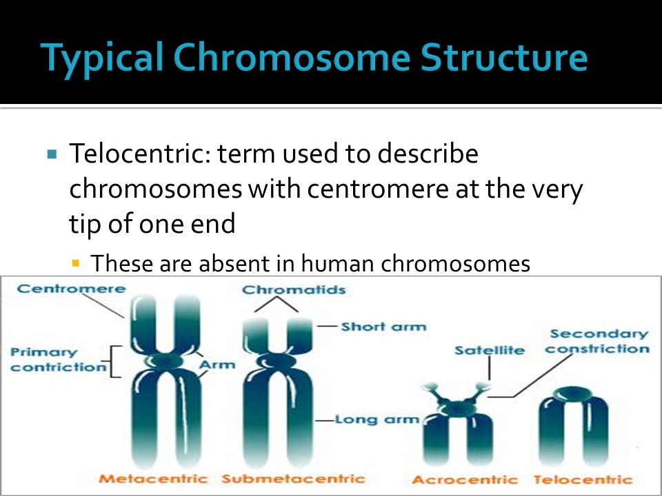Typical Chromosome Structure