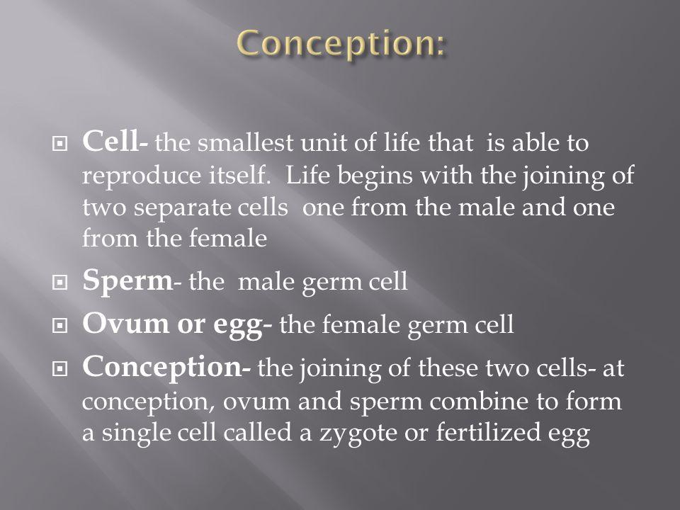 Conception:
