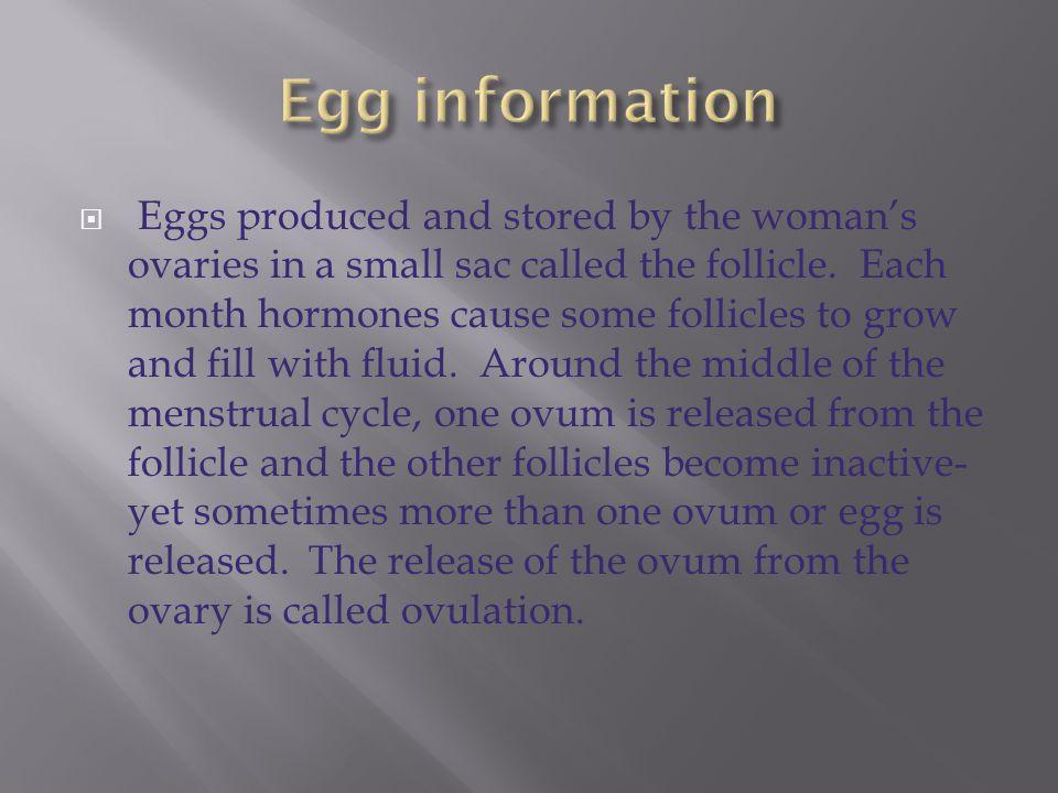 Egg information