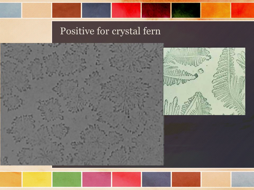 Positive for crystal fern