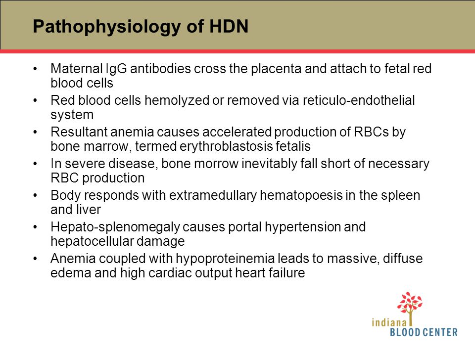 Pathophysiology of HDN
