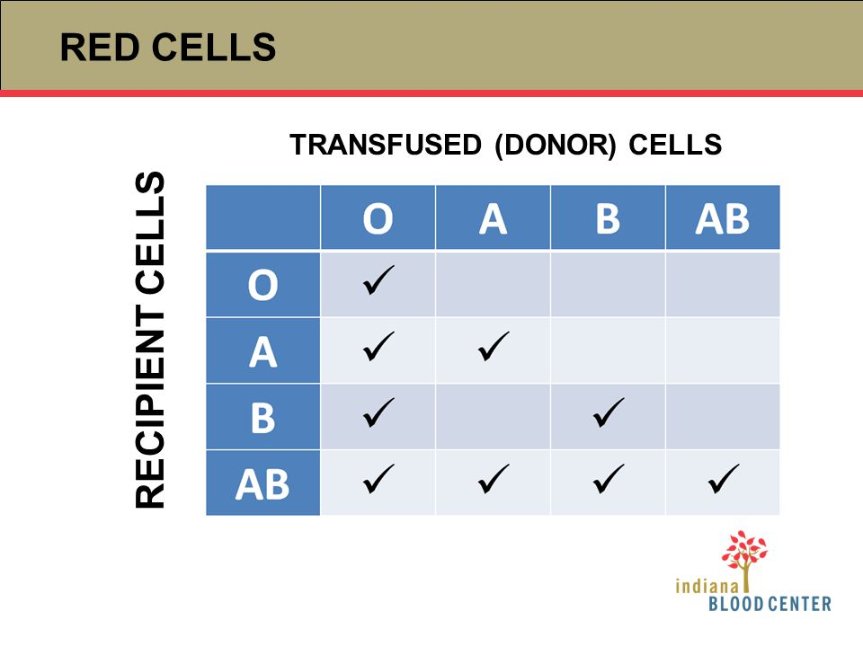 RED CELLS TRANSFUSED (DONOR) CELLS RECIPIENT CELLS