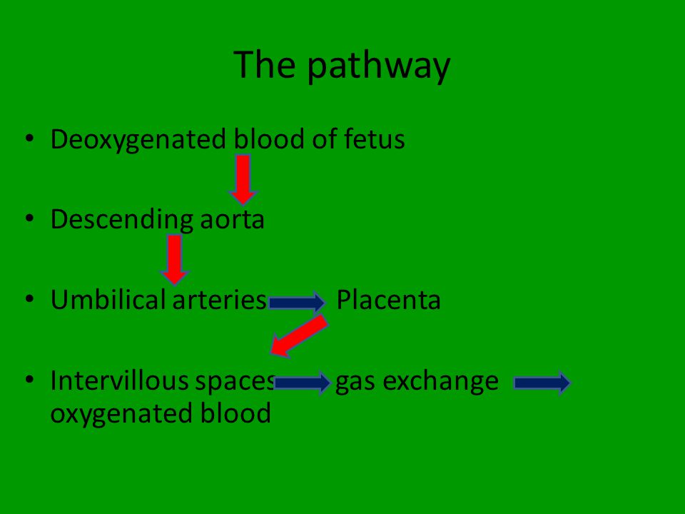The pathway Deoxygenated blood of fetus Descending aorta