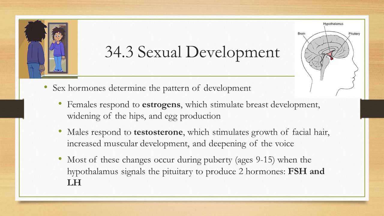 34.3 Sexual Development Sex hormones determine the pattern of development.