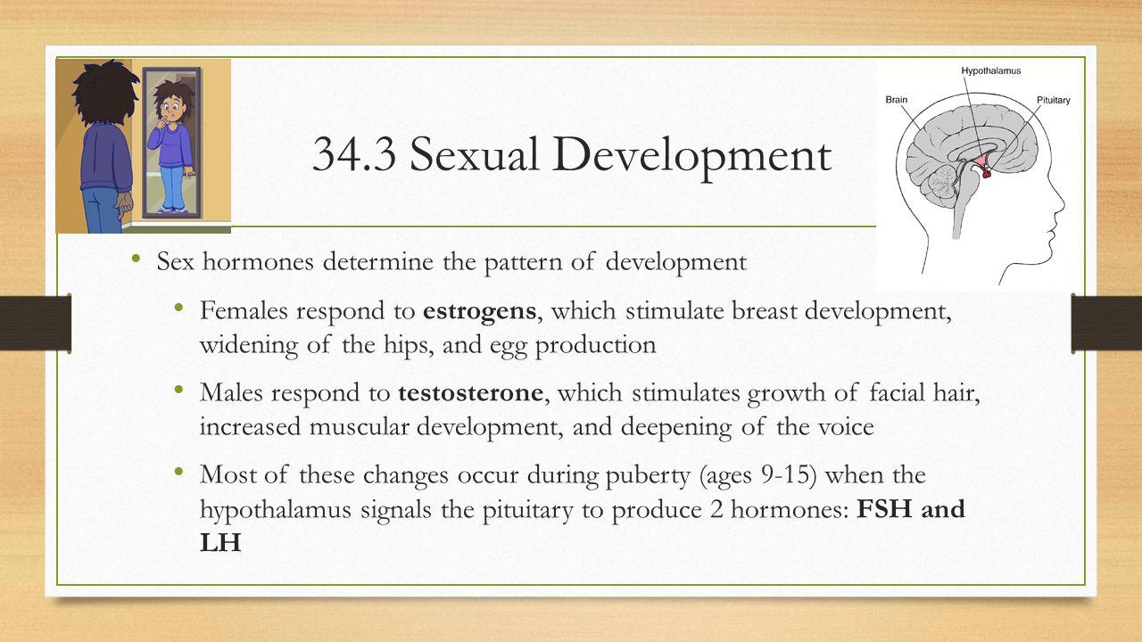 34.3 Sexual Development Sex hormones determine the pattern of development.
