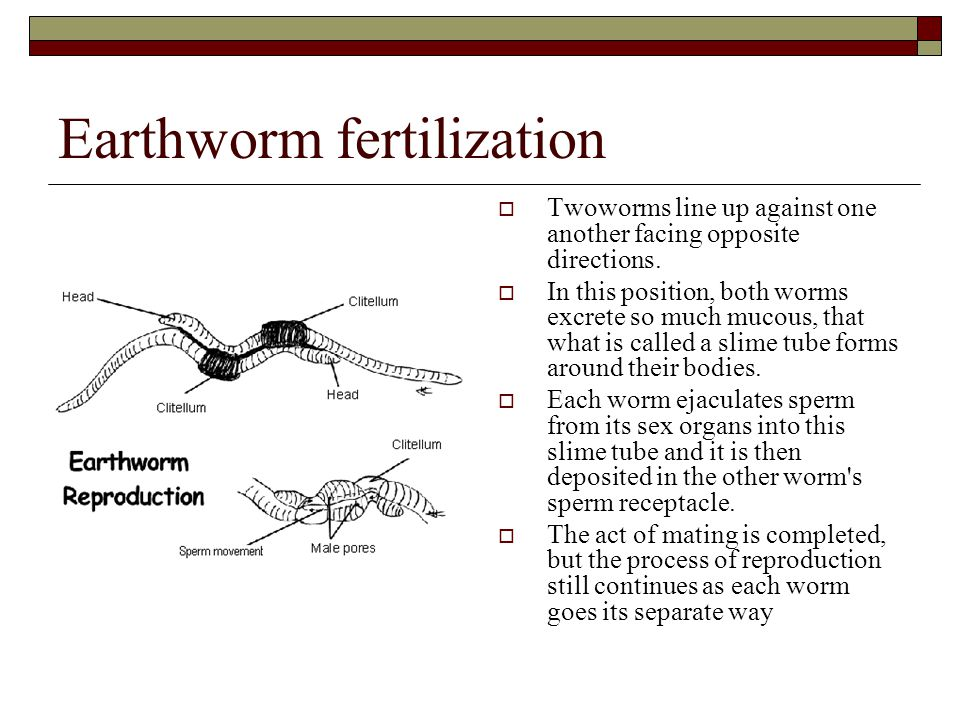 Earthworm fertilization