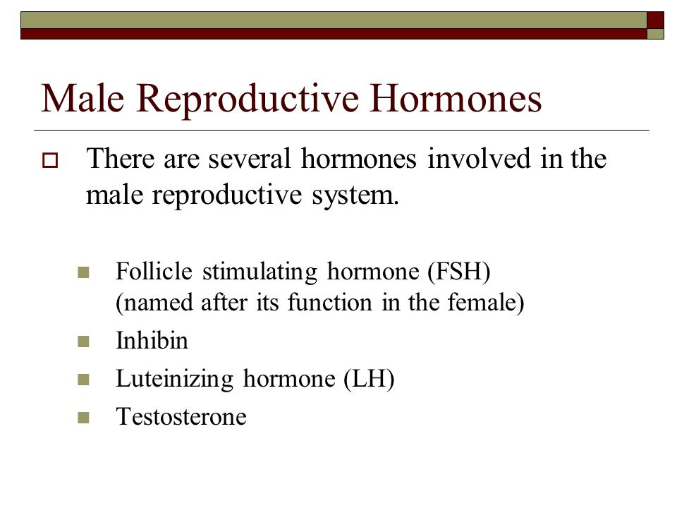Male Reproductive Hormones