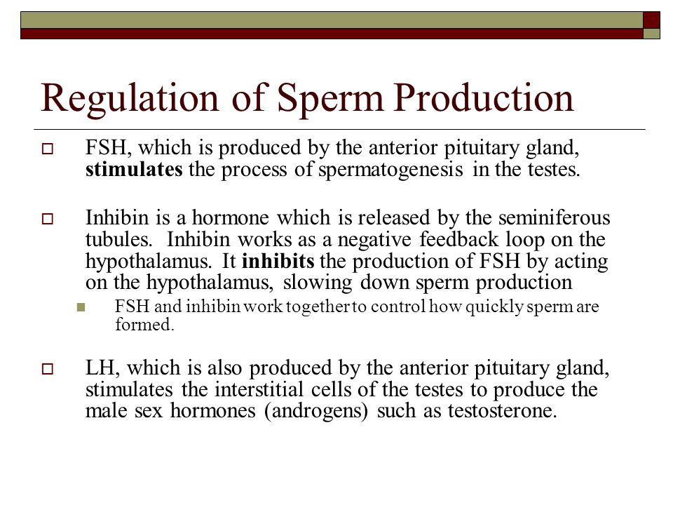 Regulation of Sperm Production