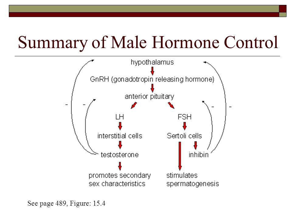 Summary of Male Hormone Control