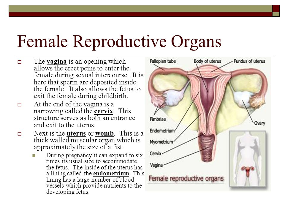 Little reproductive organ during sexual intercourse trio of.girls!!!
