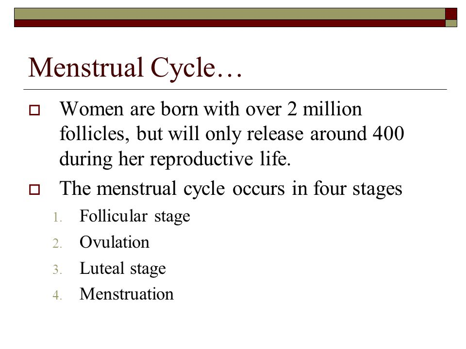 Menstrual Cycle… Women are born with over 2 million follicles, but will only release around 400 during her reproductive life.