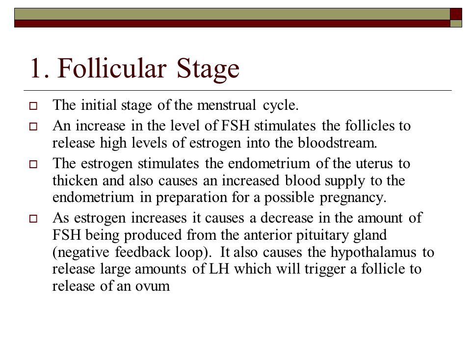 1. Follicular Stage The initial stage of the menstrual cycle.