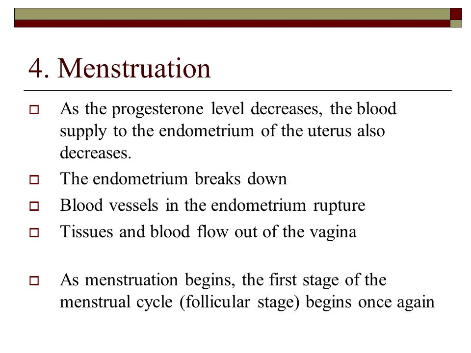 4. Menstruation As the progesterone level decreases, the blood supply to the endometrium of the uterus also decreases.