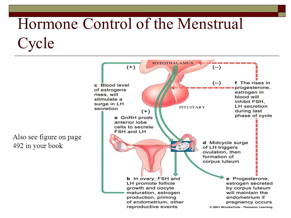 Hormone Control of the Menstrual Cycle