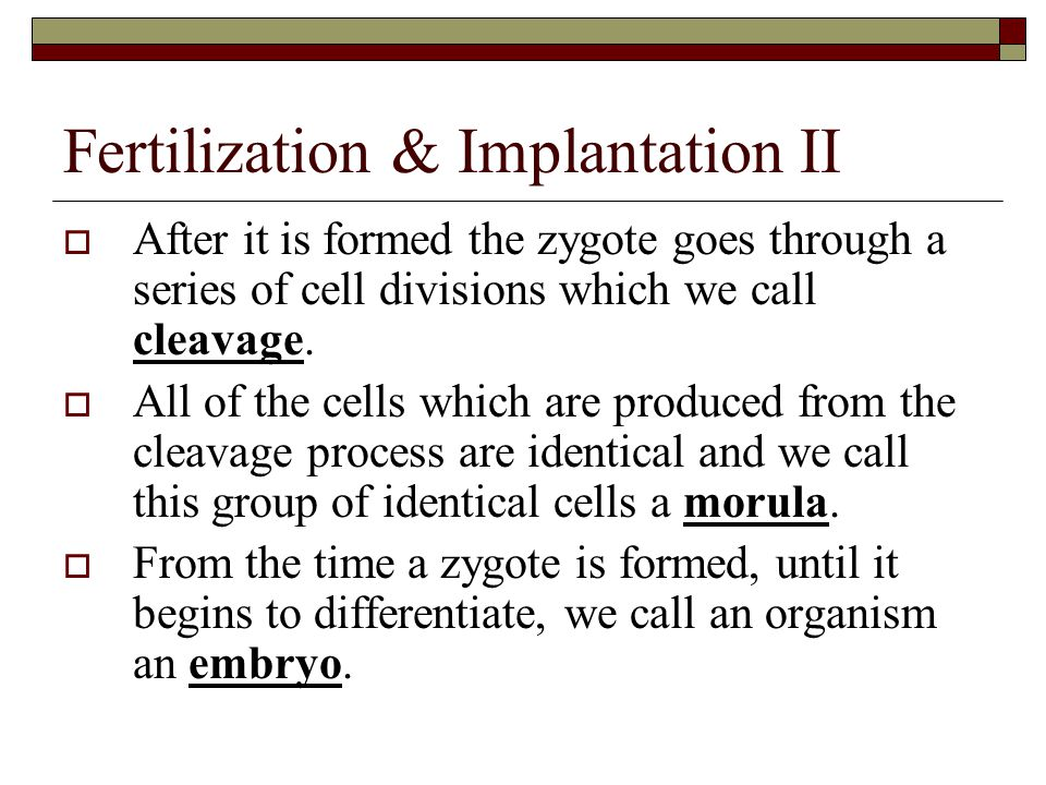 Fertilization & Implantation II