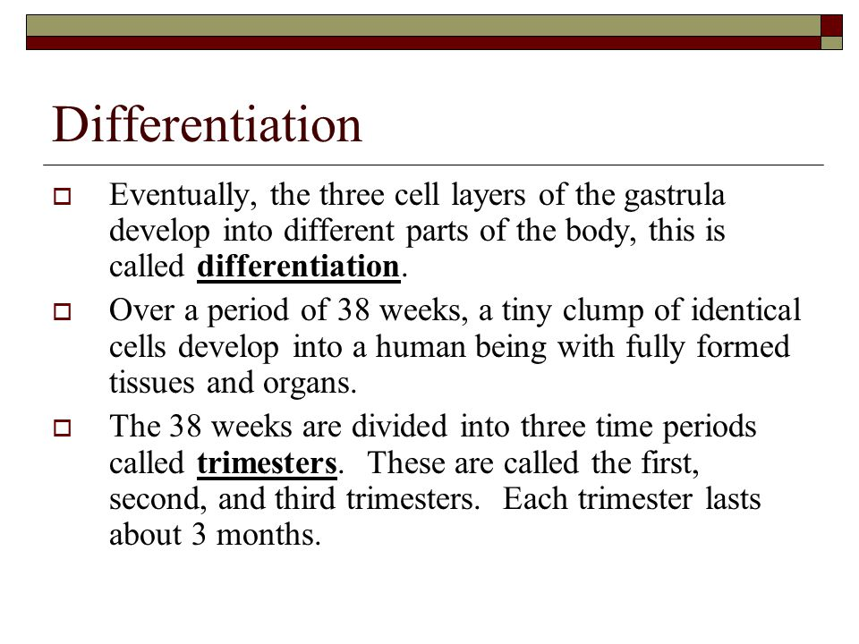 Differentiation Eventually, the three cell layers of the gastrula develop into different parts of the body, this is called differentiation.