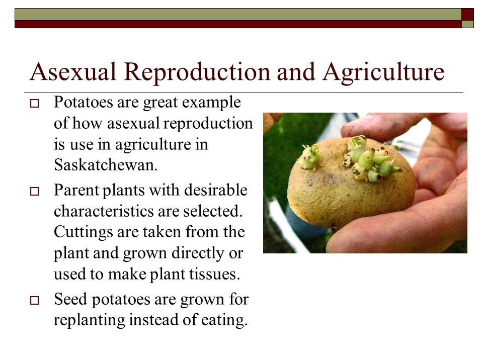 Asexual Reproduction and Agriculture