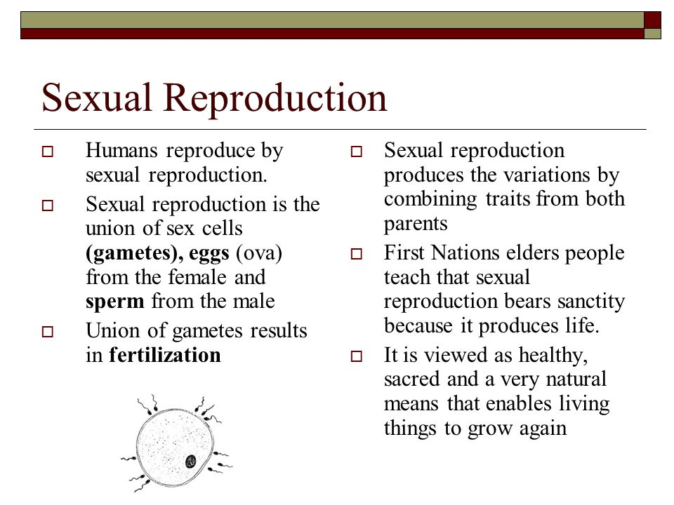 Sexual Reproduction Humans reproduce by sexual reproduction.