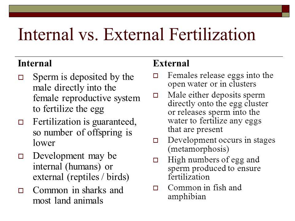 Internal vs. External Fertilization