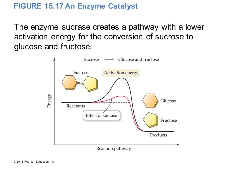 FIGURE 15.17 An Enzyme Catalyst