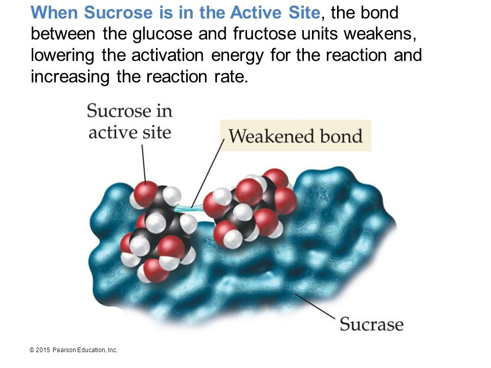 When Sucrose is in the Active Site, the bond between the glucose and fructose units weakens, lowering the activation energy for the reaction and increasing the reaction rate.