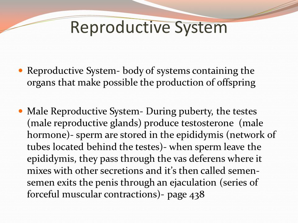 Reproductive System Reproductive System- body of systems containing the organs that make possible the production of offspring.
