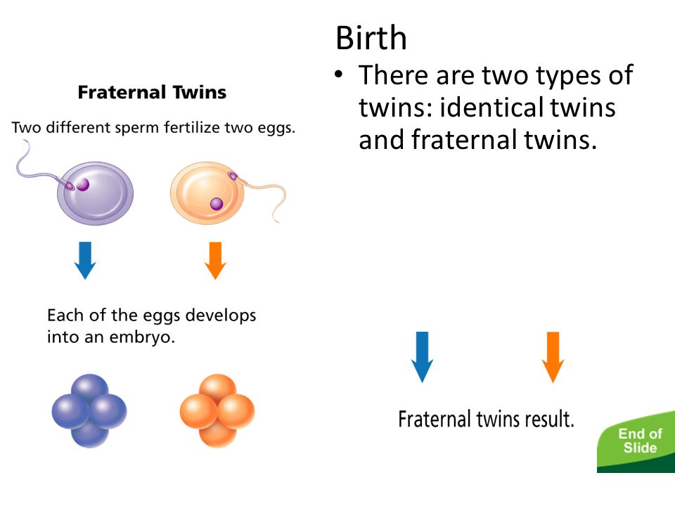 The Human Life Cycle Birth There are two types of twins: identical twins and fraternal twins.