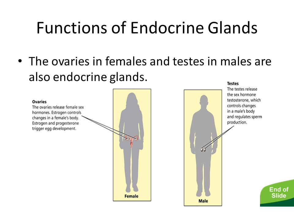 Functions of Endocrine Glands