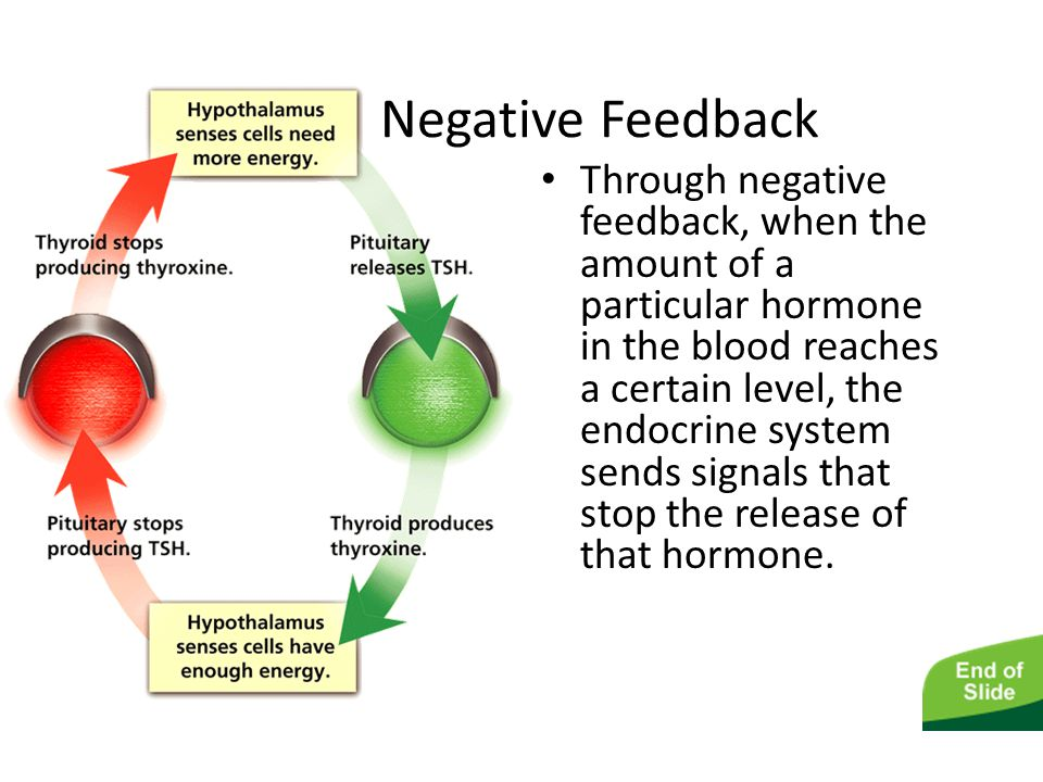 The Endocrine System Negative Feedback.