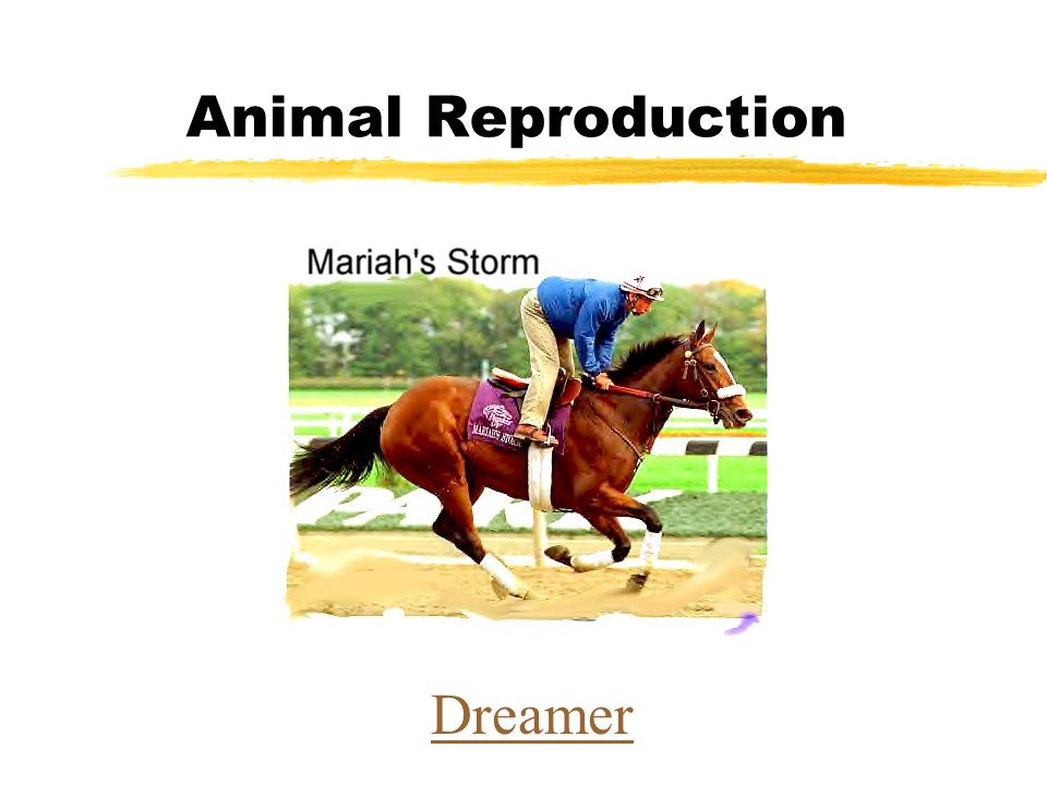 Animal Reproduction Dreamer
