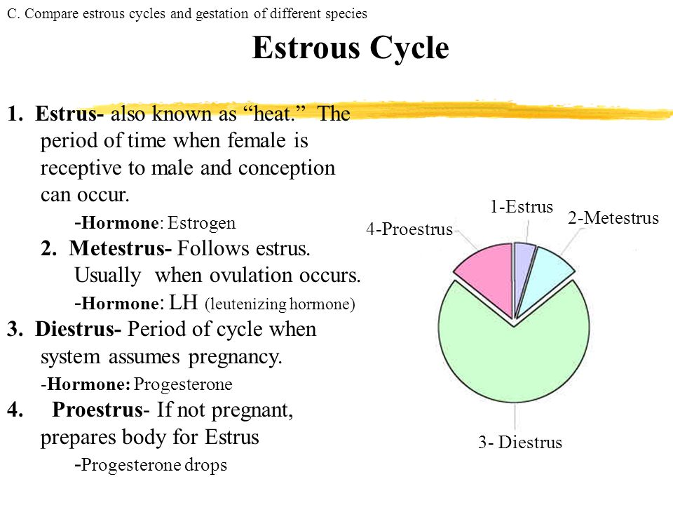 C. Compare estrous cycles and gestation of different species