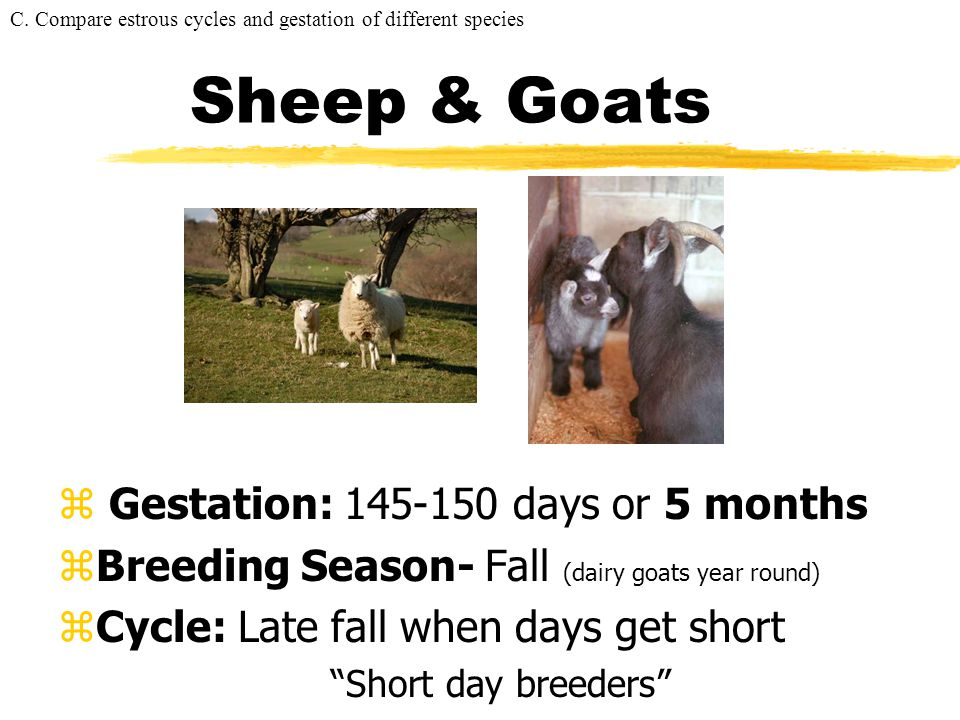 Sheep & Goats Gestation: 145-150 days or 5 months