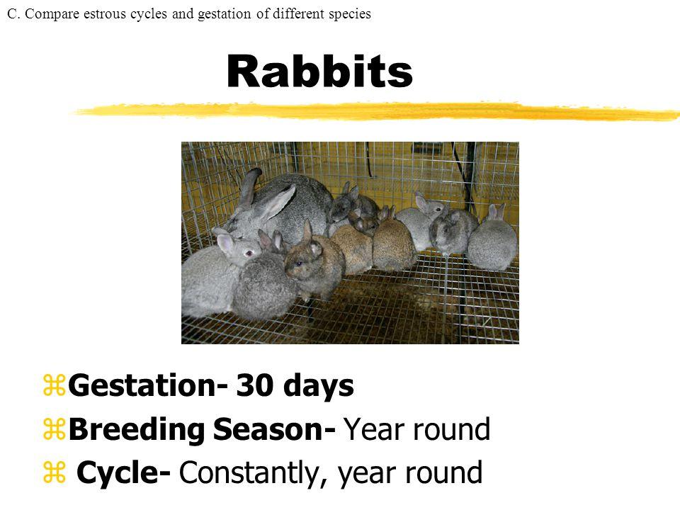 Rabbits Gestation- 30 days Breeding Season- Year round