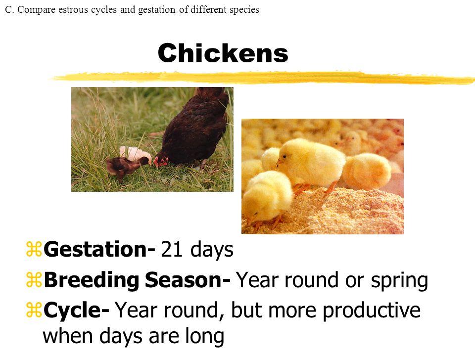 Chickens Gestation- 21 days Breeding Season- Year round or spring
