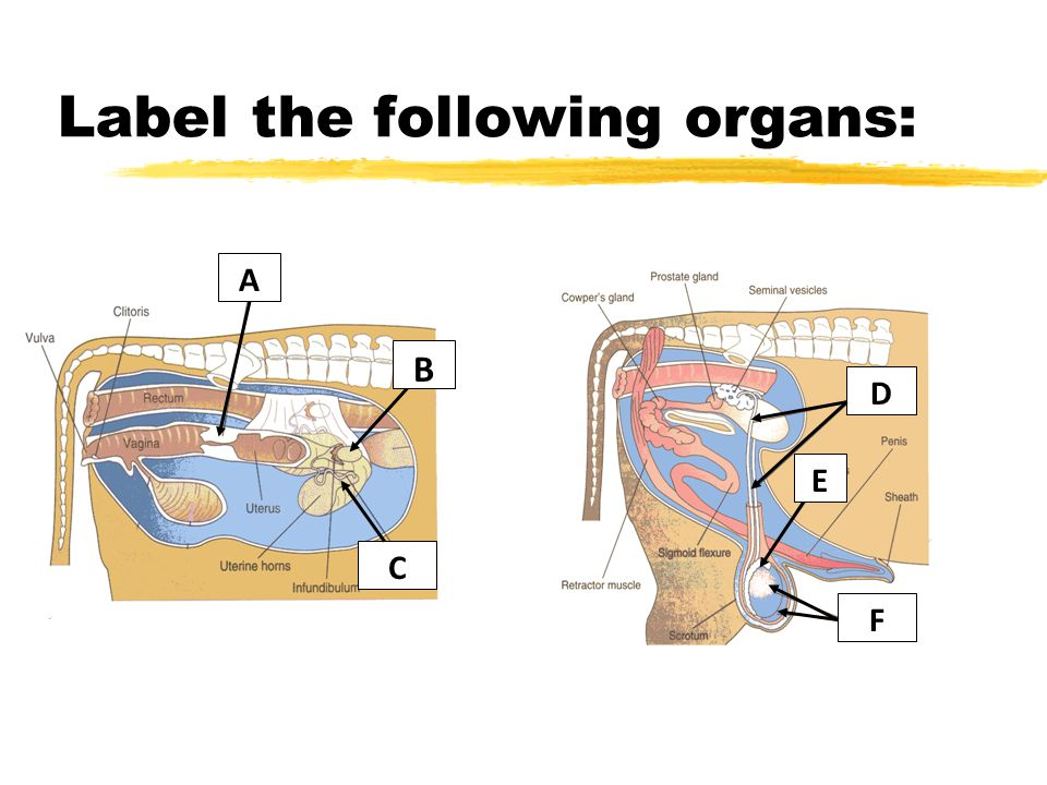 Label the following organs: