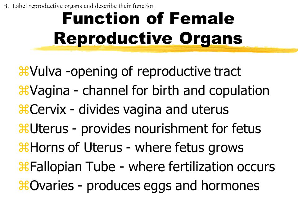 Function of Female Reproductive Organs