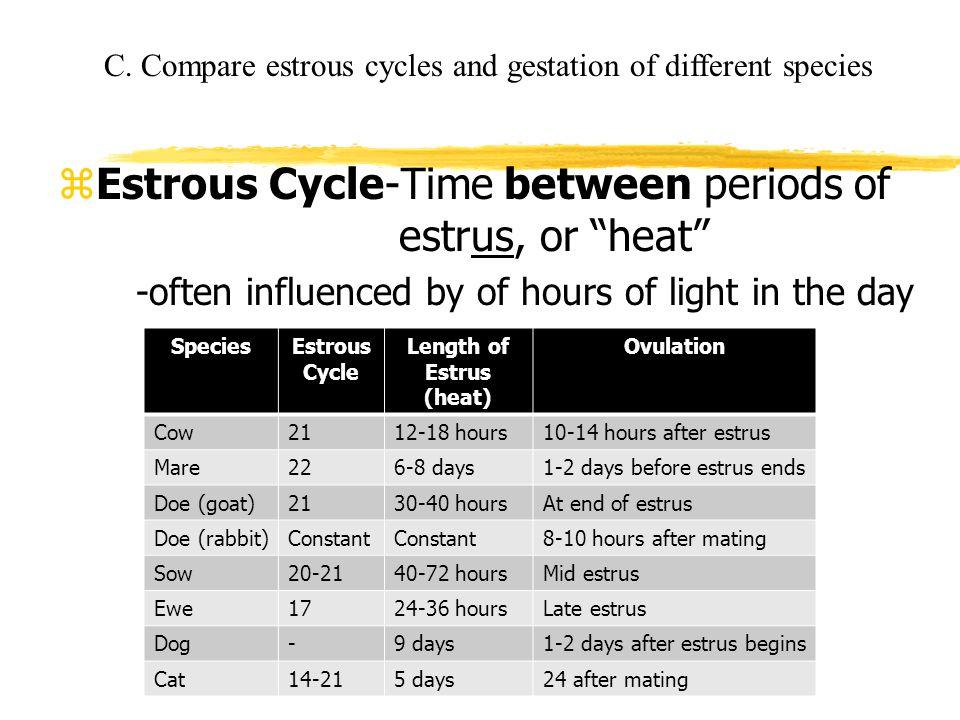 Length of Estrus (heat)