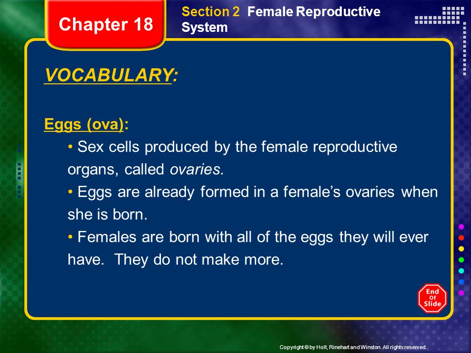 Chapter 18 VOCABULARY: Eggs (ova):