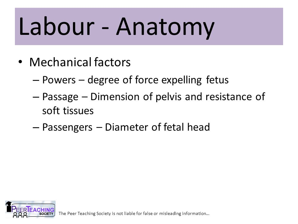 Labour - Anatomy Mechanical factors