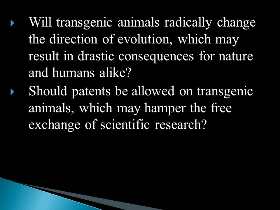 Will transgenic animals radically change the direction of evolution, which may result in drastic consequences for nature and humans alike