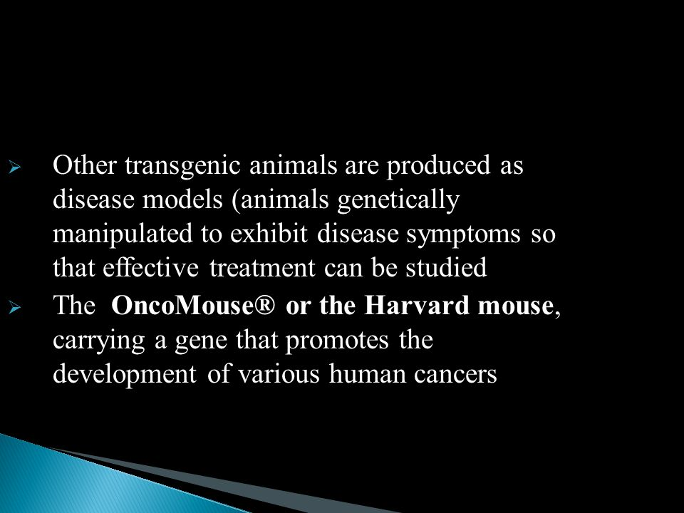 Other transgenic animals are produced as disease models (animals genetically manipulated to exhibit disease symptoms so that effective treatment can be studied