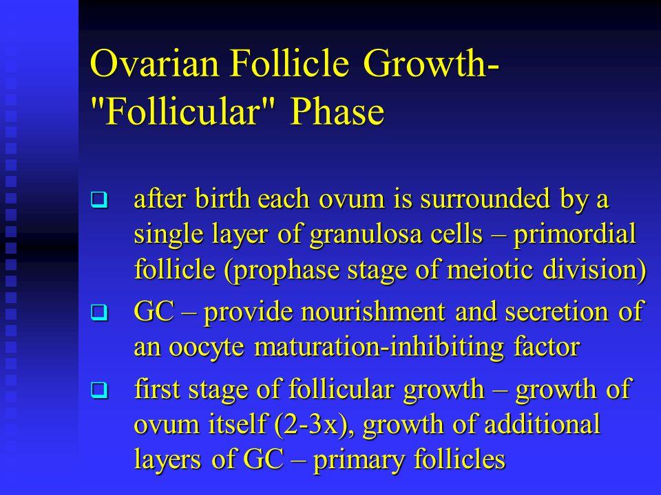 Ovarian Follicle Growth- Follicular Phase