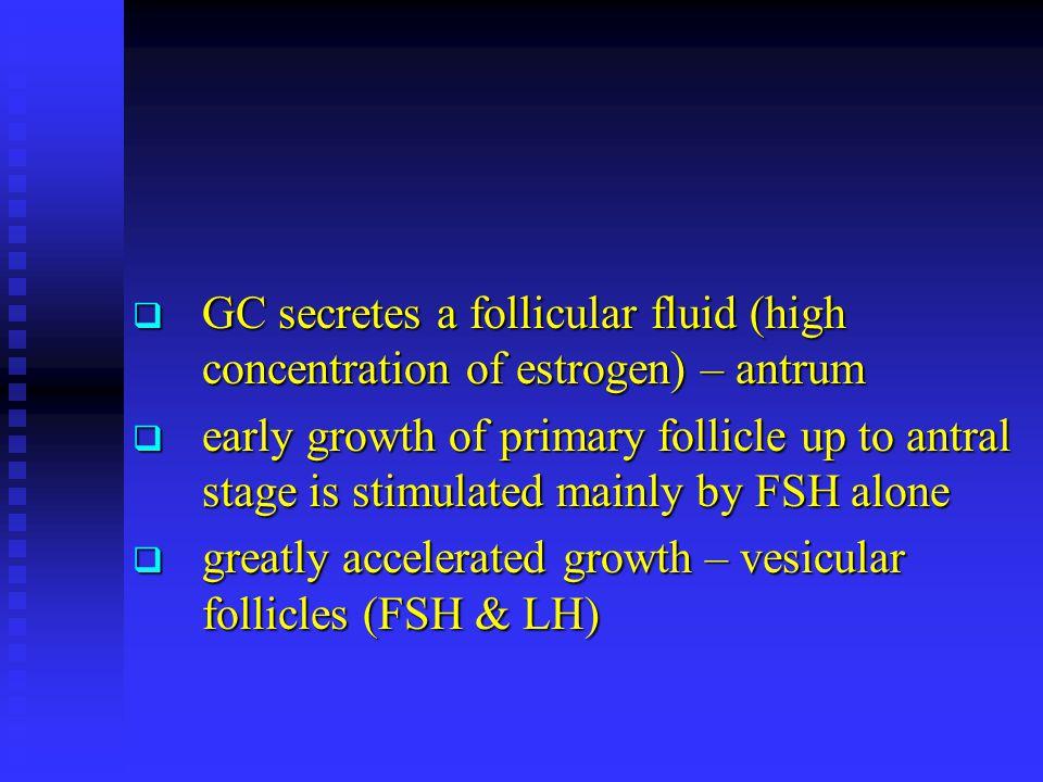 GC secretes a follicular fluid (high concentration of estrogen) – antrum