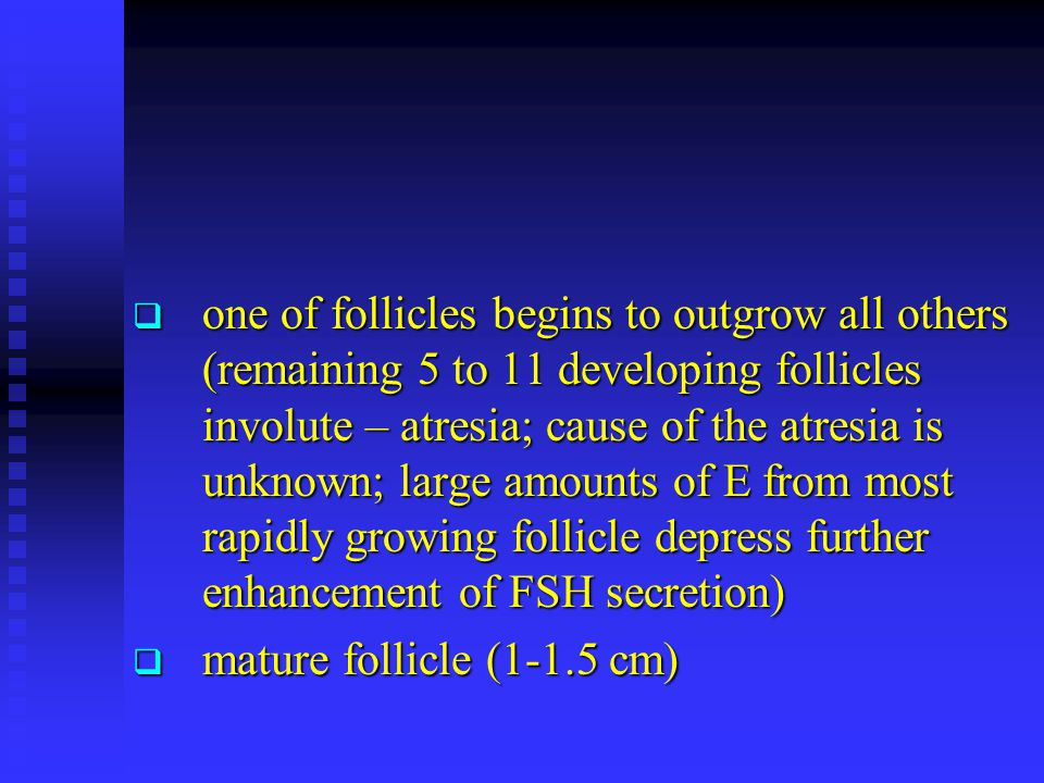 one of follicles begins to outgrow all others (remaining 5 to 11 developing follicles involute – atresia; cause of the atresia is unknown; large amounts of E from most rapidly growing follicle depress further enhancement of FSH secretion)